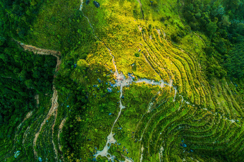 Broga Hills, Malaysia ASIA Broga Drone  EyeEm Best Shots EyeEm Nature Lover EyeEmNewHere M Algae Backgrounds Beauty In Nature Close-up Day Environment Forest Full Frame Green Color Growth Moss Nature No People Outdoors Plant Tranquility Tree Water
