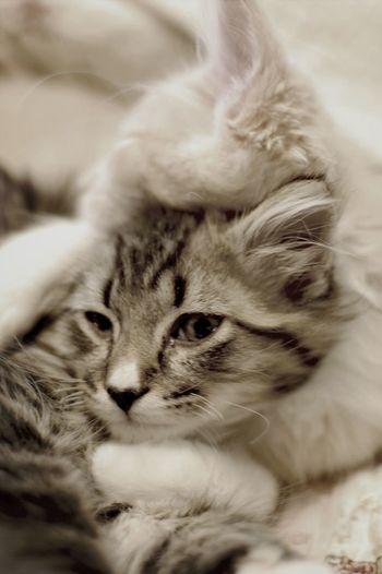 Kitty love Cat Pets Kitten Hug