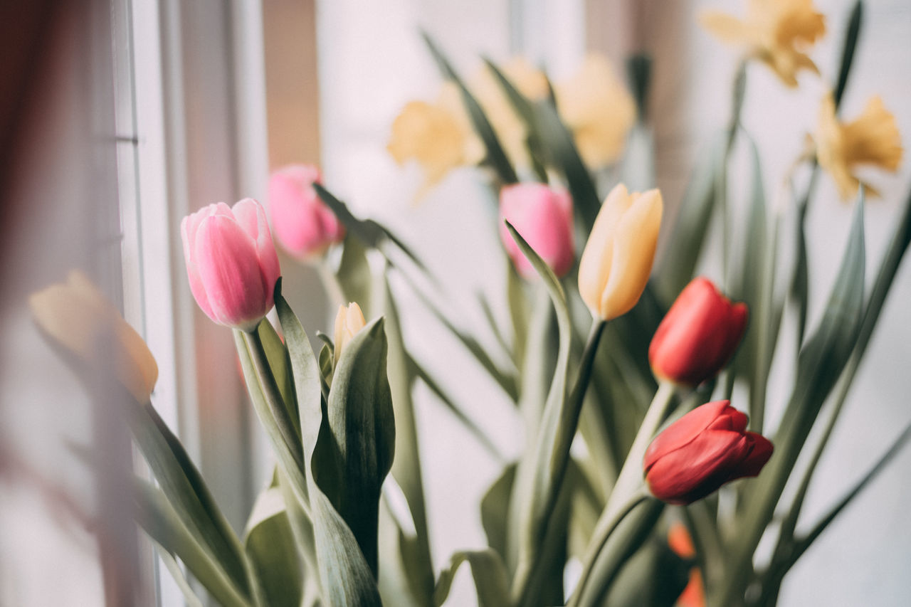CLOSE-UP OF TULIPS IN BOUQUET