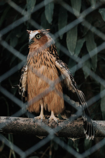 owl at garden