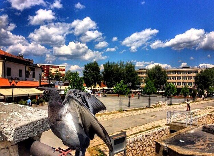 Tree Built Structure Building Exterior Architecture Sky Outdoors Day Cloud - Sky Sculpture City Statue No People Water Bird Nature Novi Pazar The Secret Spaces Break The Mold Art Is Everywhere