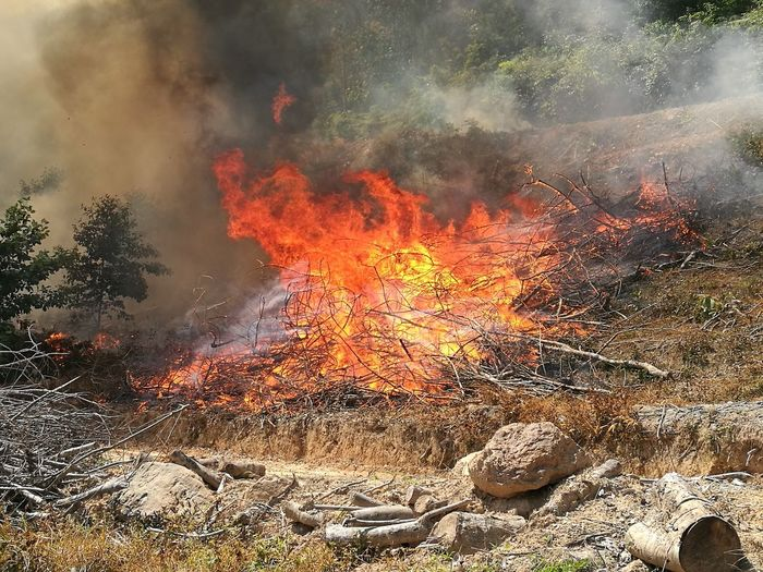 forests fires Fire Heat - Temperature Burning Danger Accidents And Disasters Destruction No People Flame Outdoors Day Nature
