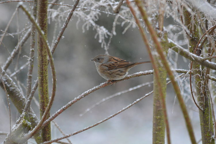 After Snowing Day Bird Branch Close-up Day One Bird Outdoors Winter