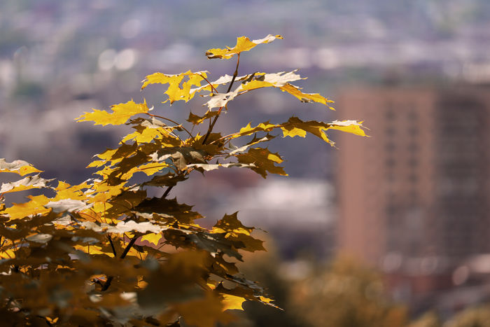 EyeEm Best Shots EyeEmNewHere EyeEm Nature Lover Beauty In Nature Beautiful Tree Branch Leaf Autumn Multi Colored Beauty Plant Part Gold Colored Yellow Sky