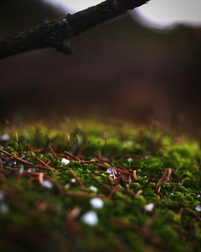 Snow ❄ Ice Nature Springtime Raining Again