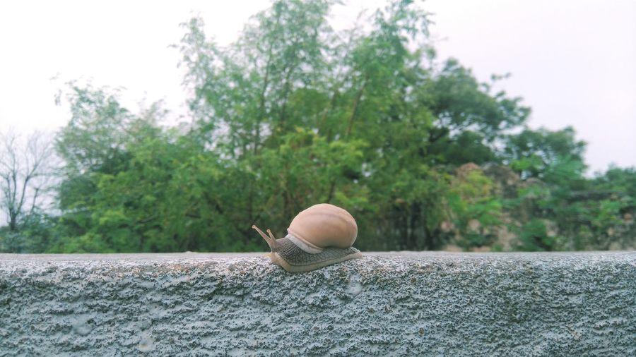 Snail Snail Shell Snail Photography Snail Life Snails Pace
