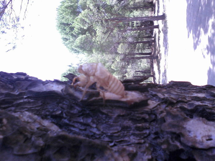 #ecdyses #forest On The Tree #NO Liv #seasons  #TURKEY/Balıkesir #wasp #wasp Leaves From Tissue