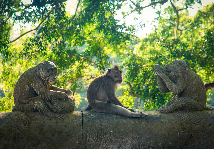 Two cats sitting on tree in forest