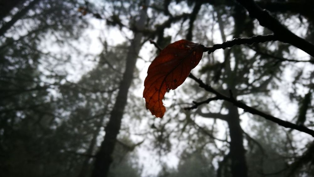 Tree Red Leaf Autumn One Animal Outdoors Nature