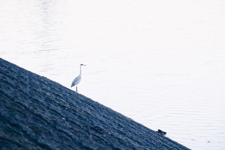 Bird perching on water