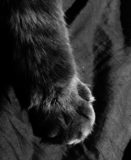 Cat paws One Animal Mammal Domestic Cat Pets Domestic Animals Animal Themes Feline
