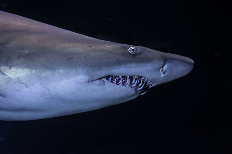Aggressive Aquarium Blue Close-up Coral Danger Dangerous Darkness Eye FIN Green Light And Shadow Nature No People Power Reef Shark Teeth