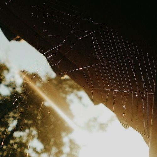 Summer Sunlight VSCO Nature Spiderweb Web The Great Outdoors - 2015 EyeEm Awards