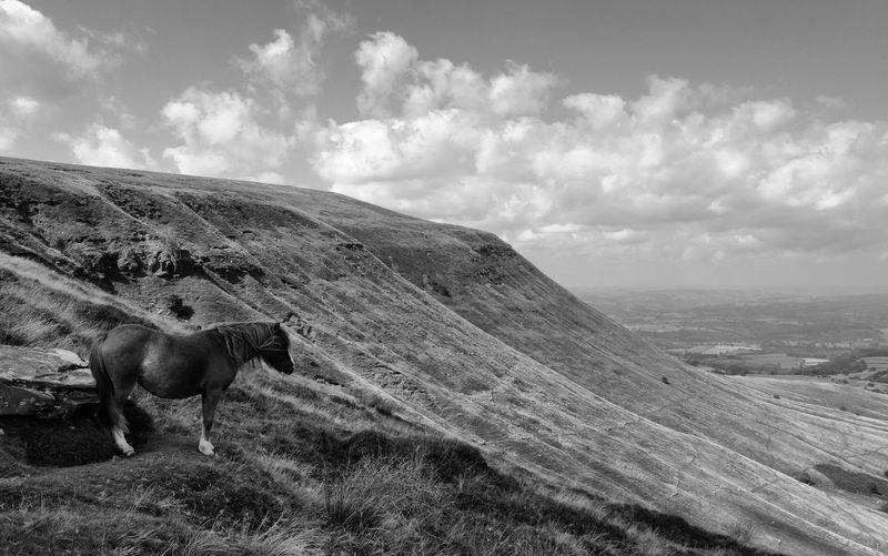 Offas Dyke Wales UK Black And White Photography monochrome photography Horse Photography  Horse Love Equine Photography Equestrianphotography Horse Life Vista Sky Landscape Cloud - Sky