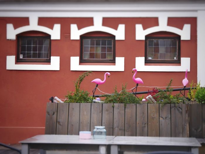 A terrace drink with Flamongos Flamongos Flamingo Terraced Field Photo Photographer Photography Photooftheday Window Box Flower Residential Building Window House Architecture Building Exterior Built Structure Potted Plant Flower Pot