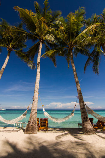 Beach Beauty In Nature Blue Day Hammock Horizon Horizon Over Water Nature No People Outdoors Palm Tree Phillipines Relaxing Sand Scenics Sea Sky Sunlight Tourism Tourist Resort Travel Tree Vacations Water