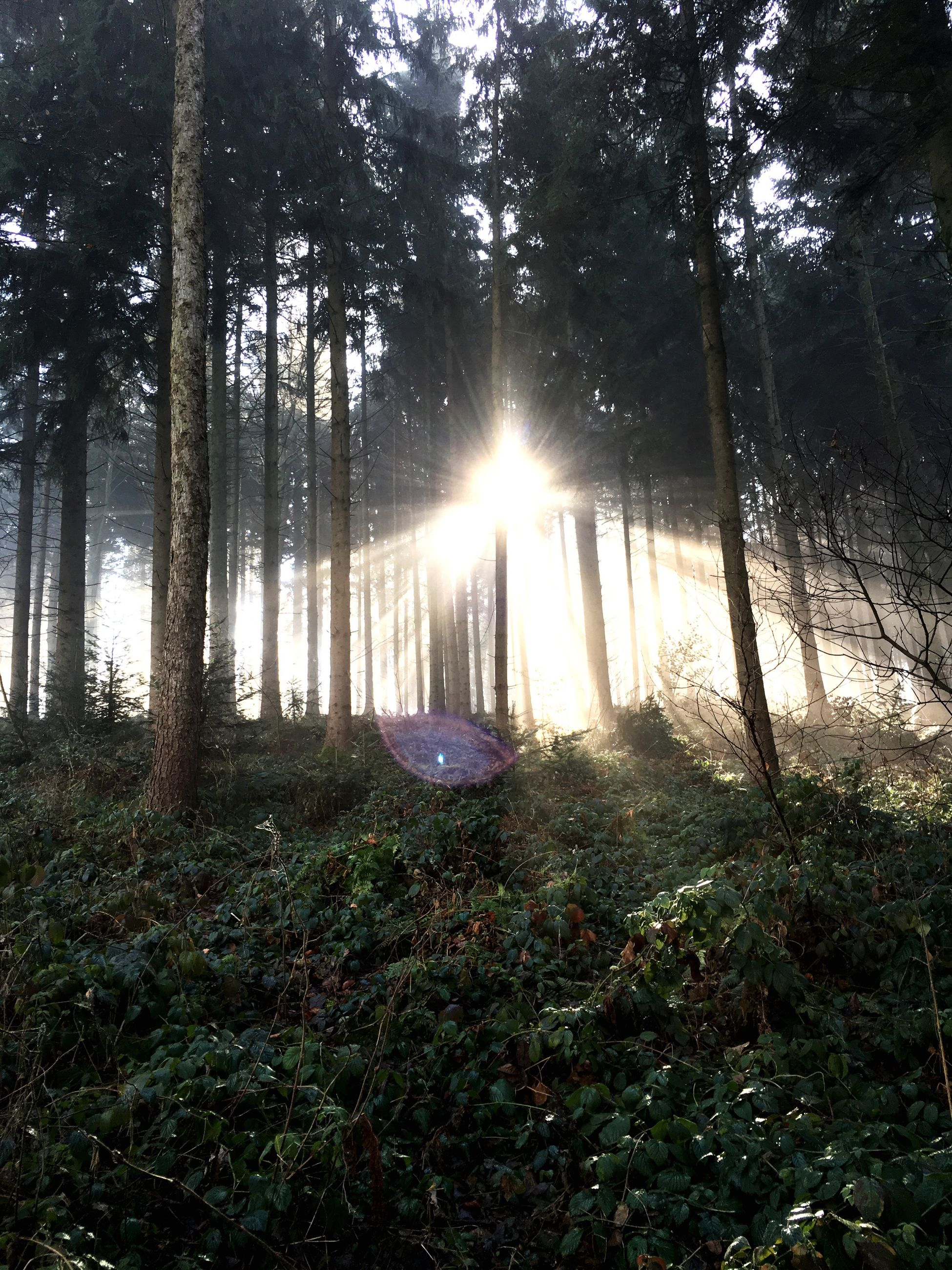 tree, forest, sun, tranquility, tranquil scene, sunlight, sunbeam, nature, woodland, beauty in nature, scenics, lens flare, growth, tree trunk, non-urban scene, landscape, back lit, idyllic, no people, outdoors