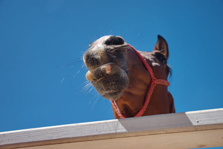 Low angle view of horse against blue sky