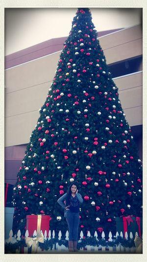 Christmas Tree having