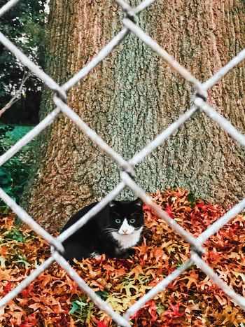 """Mom called me over, like, """"Yeli, come look at this cat just laying in the leaves!!! How cute!!"""" 🍂😯😸🍂 Protection Fence Safety Chainlink Fence Focus On Background Metal Security Selective Focus Close-up Full Frame Domestic Animals Day Chainlink Extreme Close-up Spiked Surface Level No People Cat Kitten Autumn Autumn Colors Autumn Leaves"""
