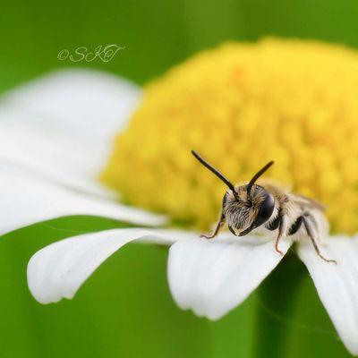Summertime =D Macroaddictsanonymous Macro Week Flowers And Insects Flower#garden#nature#ecuador#santodomingoecuador#eyeEmfollowers#iphoneonly#nofiltrer#macro_garden#pretty#beautiful#followme#sho