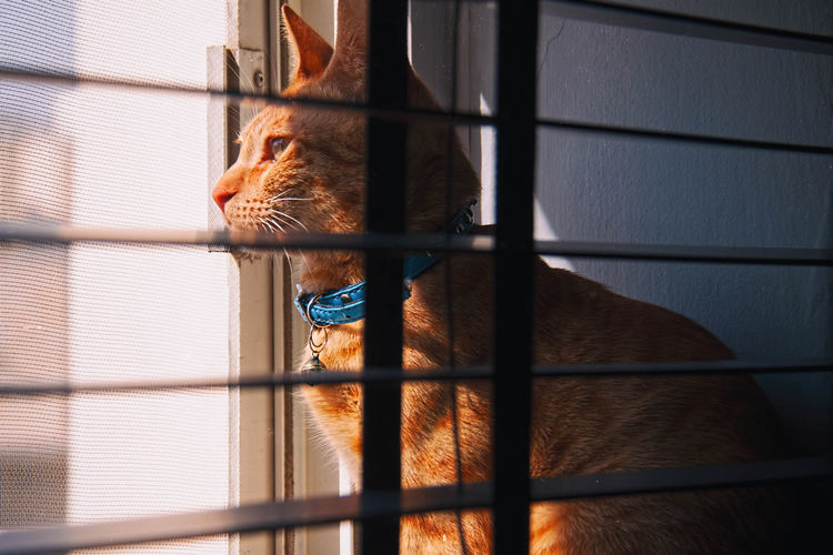 Kit Kat Animal Animal Head  Animal Themes Animals In Captivity Brown Cage Close-up Day Domestic Animals Feline Focus On Foreground Ginger Cat Looking Out Of The Window Mammal No People Pets Portrait Selective Focus Vertebrate Window View Zoo Zoology
