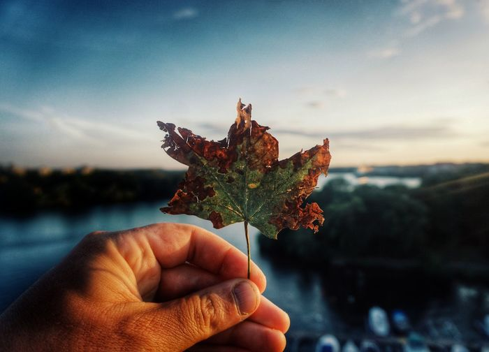 Leaf 2019 Niklas Storm Juli Human Hand Sea Holding Water Sunset Sky Horizon Over Water Calm Leaf Vein Fallen My Best Photo The Great Outdoors - 2019 EyeEm Awards