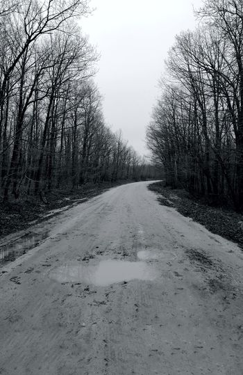 Tree Sky vanishing point Tire Track Dirt Road Plough The Way Forward Treelined Diminishing Perspective Dirt Track Empty Road Country Road Double Yellow Line Passing Pathway FootPrint Track - Imprint Growing Countryside