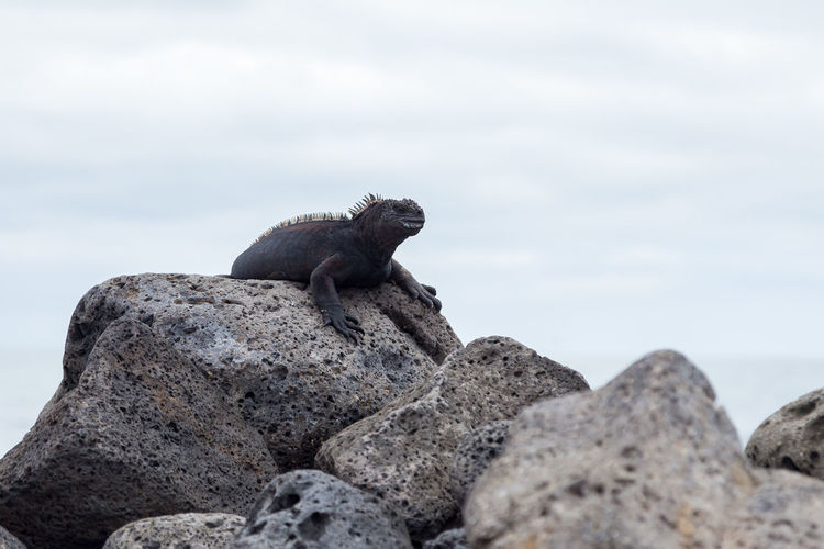 View of lizard on rock against sky