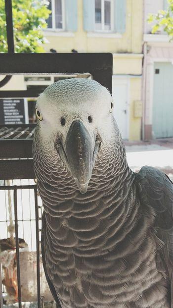 Cute Cute Pets Animals Lovely Pets Bird Bird Photography Birdwatching Birds Special👌shot