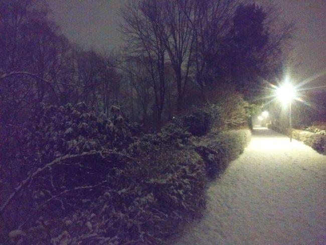 Cold Temperature Winter Snow Nature Night No People Illuminated Outdoors Tree