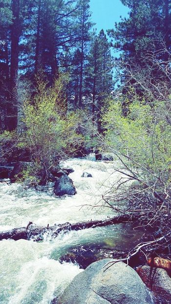 Backgrounds Nature Outdoors Tree Sky Beauty In Nature Hiking Trail Inyo National Forest Water Creek Quiet Time Scenics Tranquility Full Frame Day No People Textured  Close-up