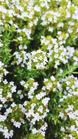 🌸 Nature White Color Day Outdoors No People Flower Green Color Plant Beauty In Nature Growth Cold Temperature Winter Backgrounds Close-up Fragility Freshness