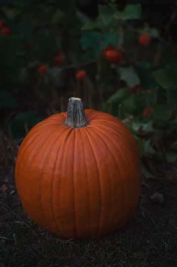 Close-up of pumpkin on land against plants