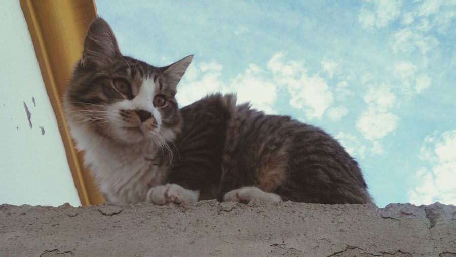 Low Angle View Of Cat Sitting On Retaining Wall Against Sky
