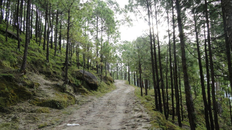 Nature The Way Forward Forest Pineforest