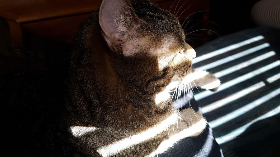 Whisker Hanging Out Taking Photos Hello World Unedited Light And Shadow Cat Domestic Animals Domestic Cat Close-up Thoughtful Focus On Shadow Shadow