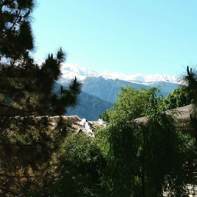 Manali beauty nature trees snow mountains scenery