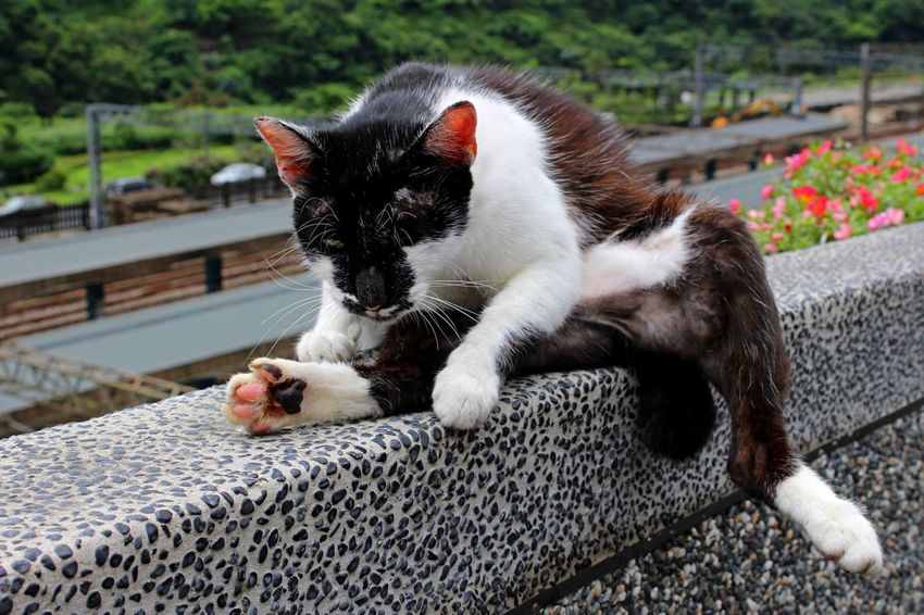Cat Catvillage Houtong Taiwan Pingxi Animals Tourism Chilling Perspectives On Nature
