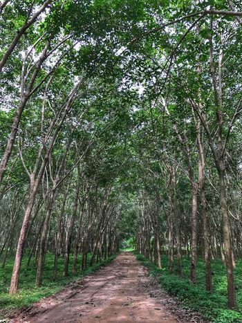 Tree The Way Forward Nature Growth Tranquility Beauty In Nature Tranquil Scene Outdoors No People Day Forest Scenics Tree Trunk Branch Landscape Freshness