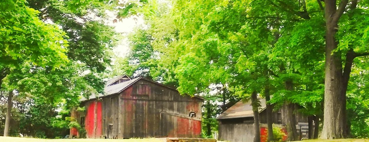 New England #godiscoversummer #siamdiscovery #barn #farm #quiet #life #farmlife #Nature  #outdoors Tree Water Architecture Building Exterior Built Structure Green Color Green Woods Farmland Sunrays Young Plant Countryside Country House Greenery Shed Grassland Relaxing Moments Shelter Summer Exploratorium EyeEmNewHere Visual Creativity
