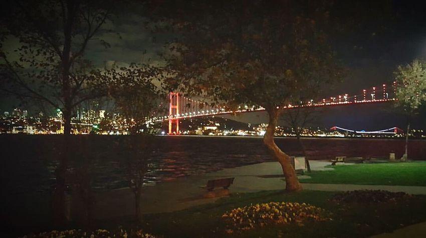 Night Reflection Illuminated Tree No People Sky Water Outdoors Nature Bridge - Man Made Structure Istanbul Istanbuldayasam Bosphorus Bosphorus Bridge Bogazici Koprusu BoğazdanManzaralar Boğaz Boğaziçi Bogazkoprusu Boğaz Köprüsü Türkiye Turkey City Day Sea
