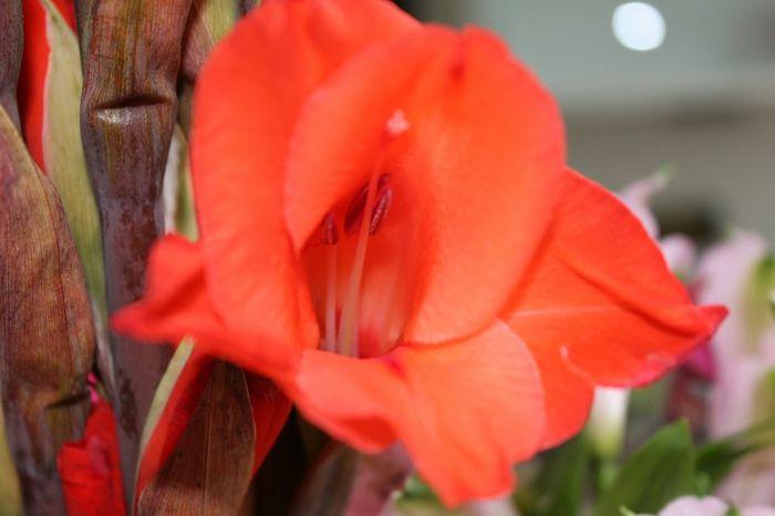 Flower Red Flower Birthday Present Testing My New Camera Take A Shot