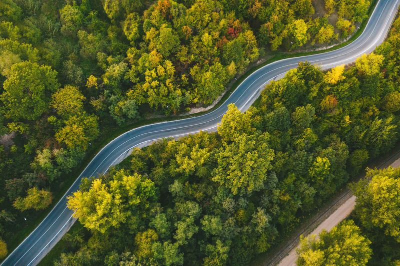 Aerial view of road amidst trees in forest