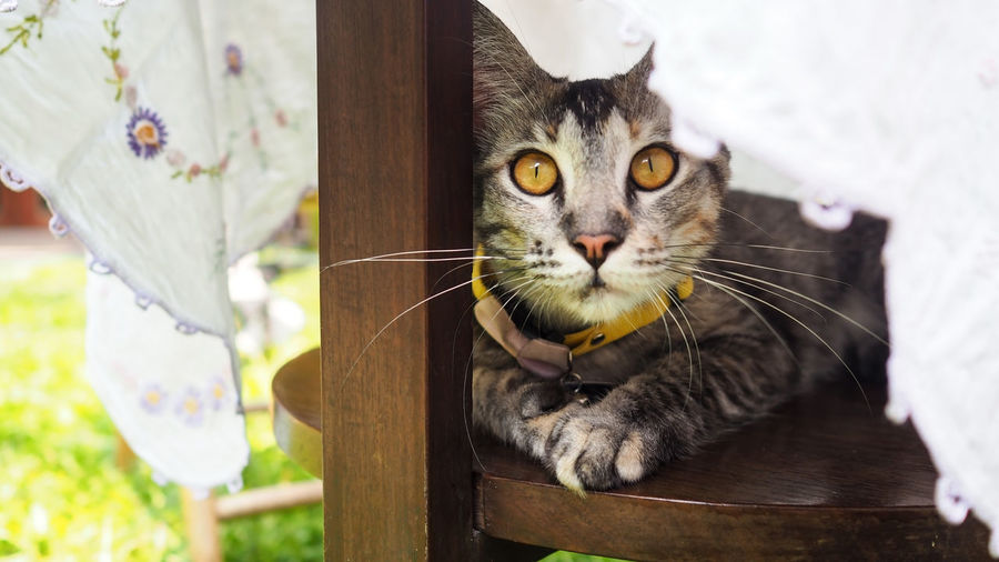 Cute kitty looking something and relaxing time in garden with soft focus for animal pet background Mammal One Animal Domestic Animals Feline Pets Domestic Cat Domestic Cat Wood - Material Vertebrate Whisker Focus On Foreground Looking At Camera Portrait Close-up Day No People Yellow Eyes Floral Pattern