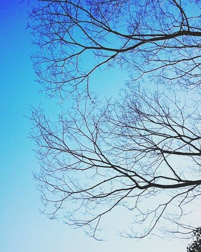 Nature Low Angle View Blue Sky Bare Tree Beauty In Nature Day Tree Freshness Blue Sky No People Flying Outdoors Bluesky Branch Memory Of Lights Memory Of The Day Japanese  JapaneseStyle Japan Photos Japanese Photography EyeEm Selects Nature Beauty In Nature