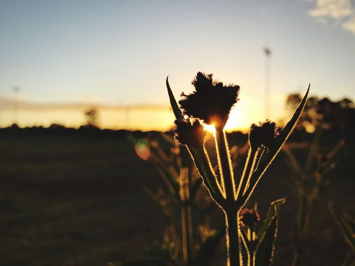 Close-up of silhouette plant on field against sky