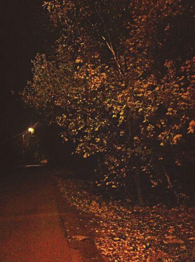 Hugging A Tree Autumn Night