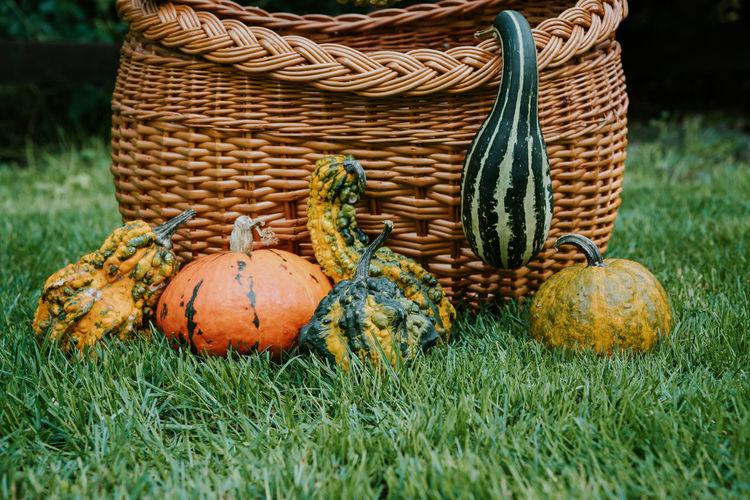 Close-up of pumpkin in basket on field