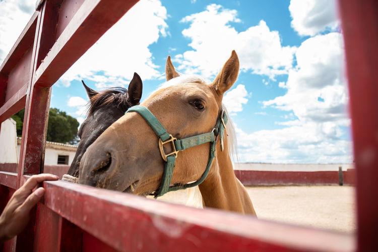 Horses in a row against the sky